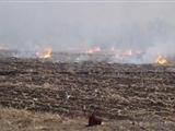 新疆阿克苏地区21天内烧荒烧出火灾38起
