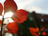 三伏退场高温难现 乌市的秋天即将到达